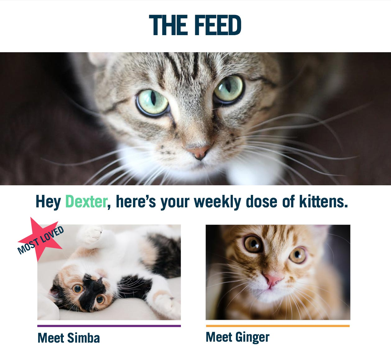 Email Marketing for Publishers - The Feed - Cat Email