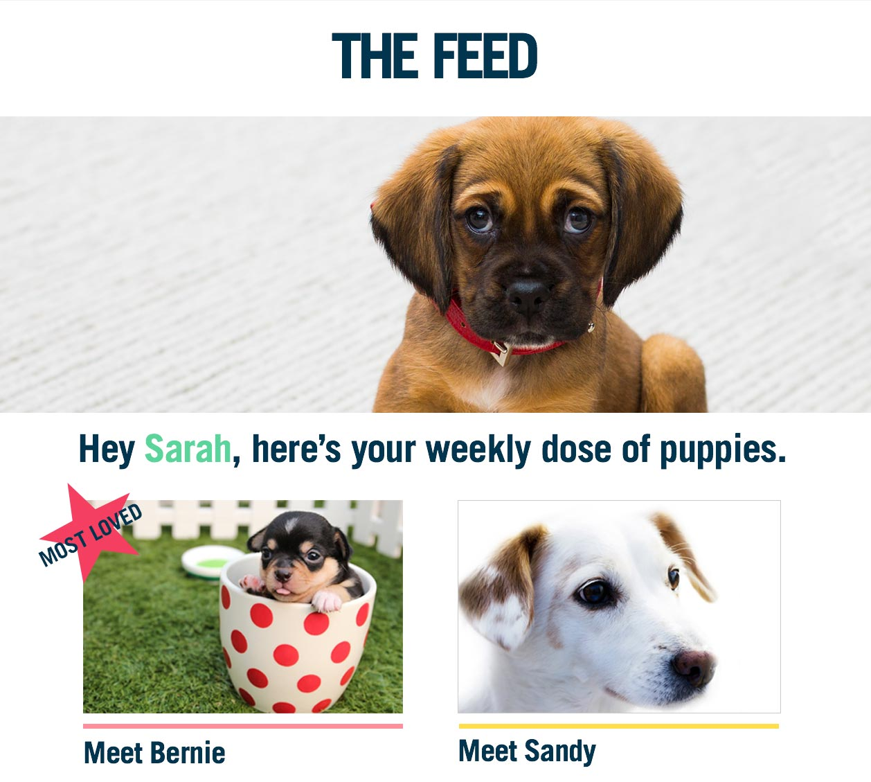 Email Marketing for Publishers - The Feed - Dog Email